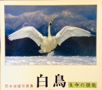 白鳥 生命の讃歌  ー若本俊雄写真集ー