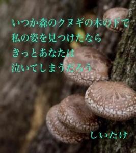 いつか森のクヌギの木の下で私の姿を見つけたならきっとあなたは泣いてしまうだろう