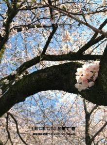 "【五七五七七】短歌で""春"""