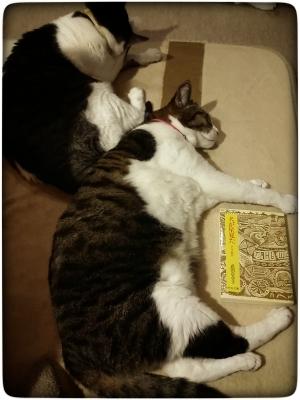【月曜から読書会】2回目の投稿は『犬が星見た ロシア紀行』武田百合子著。猫も寝正月。食っちゃ寝、読んじゃ寝。