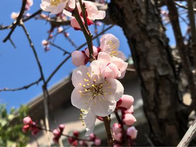 春だ〜!美しい花と花粉、、(T ^ T)