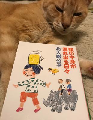 猫も喜ぶ(笑)