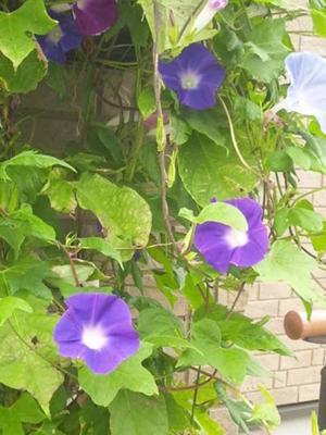 こんにちは♪ 朝方の雨は、すっかり上がりました。 暑いくらいです、今日は孫の「お宮参り」でした。 晴れて良かった~、今日も一日、お元気で!