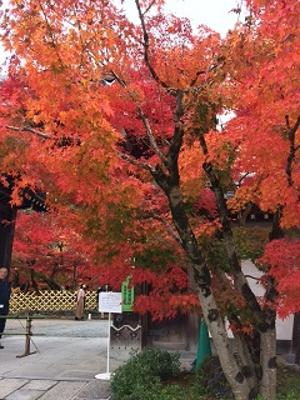 永観堂の前を通ったら、すごく綺麗でした!!これは出口の門で、中の庭も紅葉いっぱいなのが見えます。今日は他の用事で近くを通っただけで、中には入ってる時間がなかったのですが。この下の南禅寺も傍を通っただけですが紅葉が一面、すごく綺麗で、人が多かったです~!!