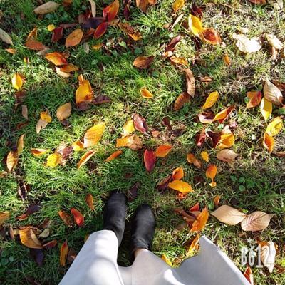 暑い暑いと言っていたのにいつの間にか秋。ちゃんと季節は巡るものなんですねぇ🍂