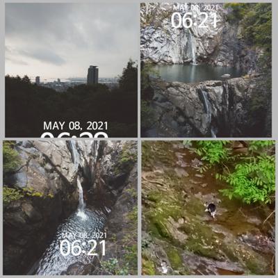 269日目 ヌコさんが川に降りて水のんでました。川にヌコってなかなか目をひく光景でした。