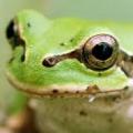 瀬戸内の蛙