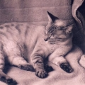 猫はアンモナイト