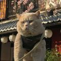 猫夢 vaicorinthians