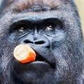 Book Gorilla