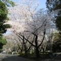 Shiroi Taiyo