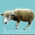 koyata56