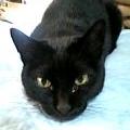 黒猫堂▽・w・▽
