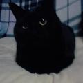 猫好き古本屋のつぶやき