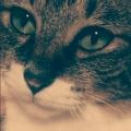 好奇心は猫を×××