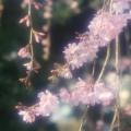 花宴(紅葉賀)