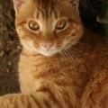 虞蒙もしくは風船猫