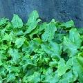 t_leaf