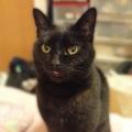 黒猫 三十郎