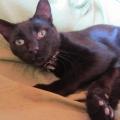 Seis Gatos Negros