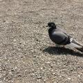 mutu-bird
