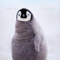 ペンギン伊予守