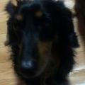 お犬 @hisamarun
