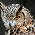 owlsbox01