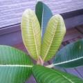 leafmoon07