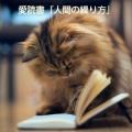 あねさ~煩悩のままに読み進む~