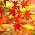 花紅葉(▽`∀▽)