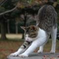 猫吉夜市丸