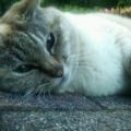 Nana the cat of the world