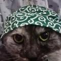 どろぼうネコ