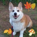 ★Masako★11月はちょっとだけ犬祭り🐶