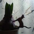 球根を支える猫