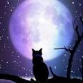 wisteria5610