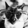 メガネねこ