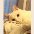 白猫リラコ
