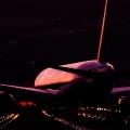 wing681