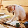 cat_typing