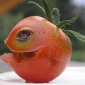 tomaton44
